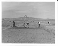 Historic photo of farmers working in a field planting crops
