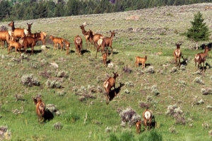 A herd of elk in a field