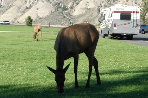 The Call and the Drama of Wapiti Valley 2