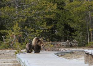 Yoga the Bear 1