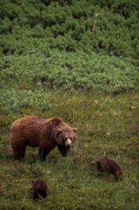 Yoga the Bear 2