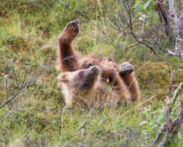 Yoga the Bear