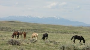 Corrie N. Cody's Top 11 list of best places to view wildlife in Buffalo Bill's Cody/Yellowstone Country 6