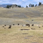 Top 11 Things To See In Yellowstone National Park 3