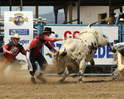 A rider takes on a bull at the Cody Stampede