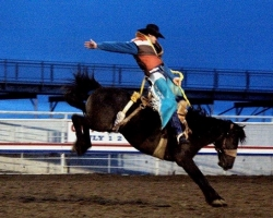Cowboy riding a bucking bronco at the Cody Rodeo