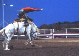 A cowboy rides a bronco at The Cody Nite Rodeo