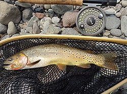 Boulder Basin Outfitters