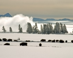 Skiing and Snowshoeing in Yellowstone National Park