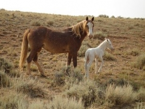 A mother horse and foal standing in a field