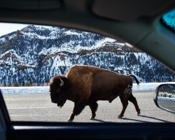 #That's WY Travelers Should Visit Cody Yellowstone in the Winter 1