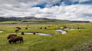 """Not The Year to Wing It;"" Tips for Planning a Cody Yellowstone Trip This Summer 4"