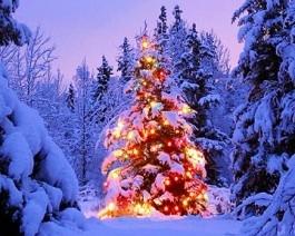 Country Christmas Sample the Season