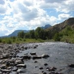 Ranger Robin's Report From Yellowstone's East Entrance
