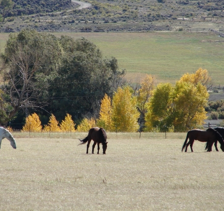 Horses along the East Yellowstone Loop
