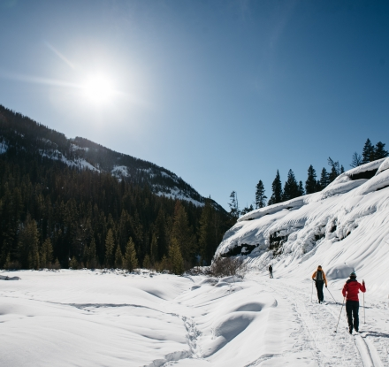 People Cross Country ski on a sunny winter day in Cody Yellowstone.
