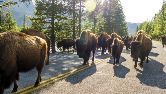 A Cody-to-Yellowstone Day Trip You Can Experience Right Now 1