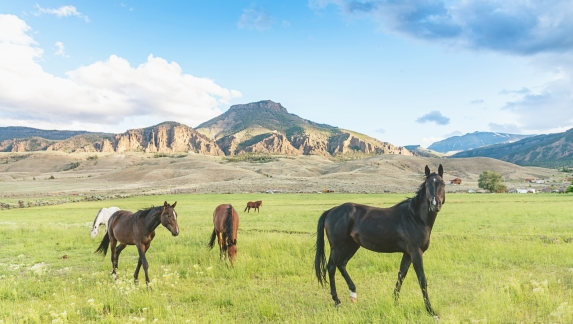 Wild horses in the vast and beautiful landscape of Wyoming, near the town of Cody, USA.