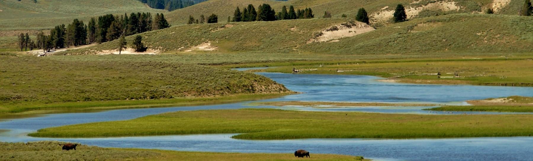Yellowstone (162)