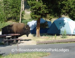 Madison Campground WM