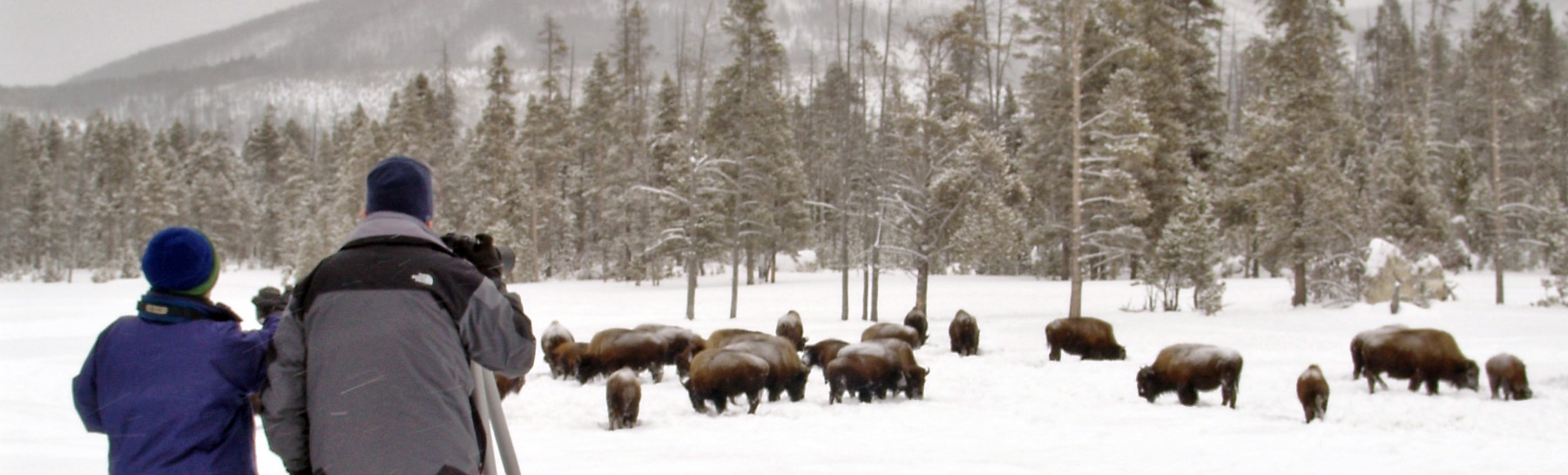 Winter Yellowstone Tour (16)