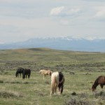 Horses grazing on the prairie with mountains in the background