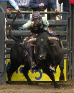 Bull riding champion, Kanin Asay at a Cody/Yellowstone Xtreme Bulls event.