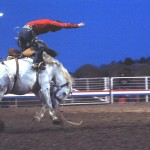 bronc rider on a white horse bucking