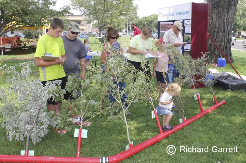 Tree ID (c) Richard Garrett (Katherine Thompson) wm