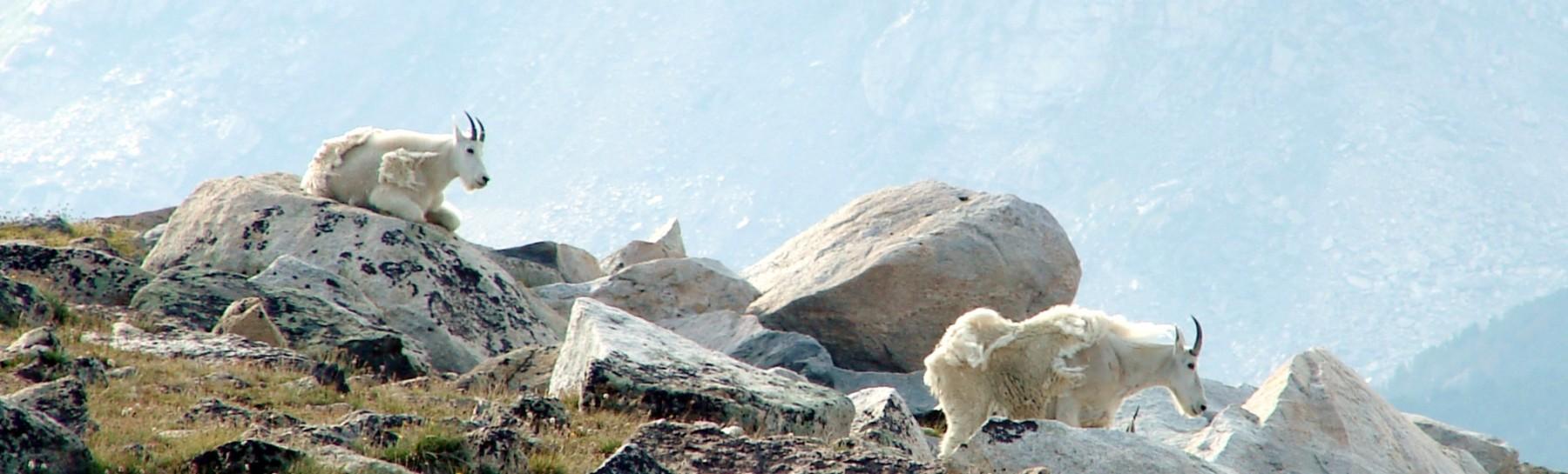 Beartooth Mtns (35)