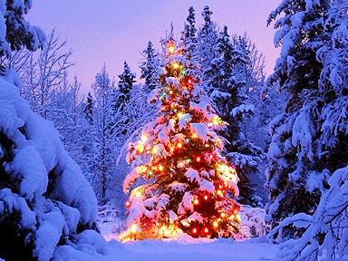 Image result for christmas in yellowstone