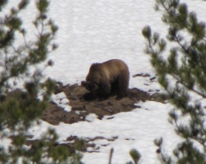Early Spring's provide better opportunity to see bears coming out of hibernation.