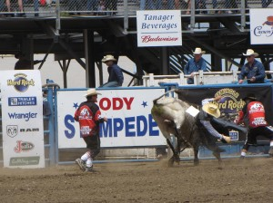 The action never stops at the four Cody Stampede Rodeo performances