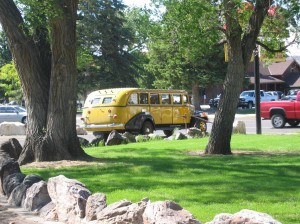 Historic yellow buses are a great way to tour Yellowstone in the summer