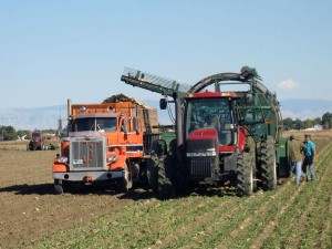 Many family farms have been operating for generations