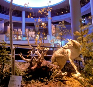 Exhibits in the Draper Natural History Museum