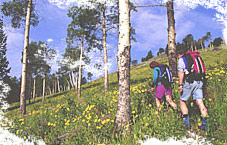 Hikers walk along a tree-lined trail in Cody/Yellowstone Country.