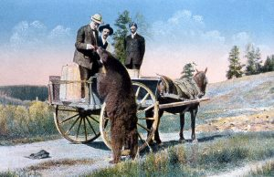 A postcard depicts men on a horse-drawn carriage interacting with a bear in Yellowstone National Park.