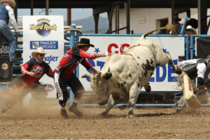 Cowboys face off with a bull at the Cody Stampede
