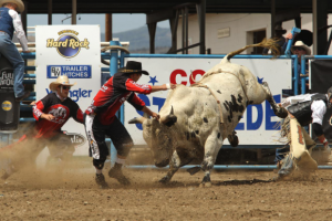 Rodeo clowns distract a bucking bull at the Cody Stampede