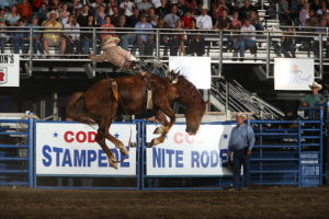 A cowboy rides a bucking horse at the Cody Nite Rodeo