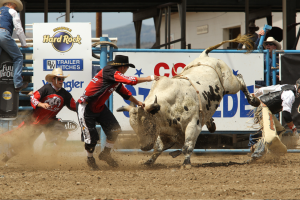 Cowboys tame a bucking bull at the Cody Stampede.