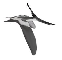 Artist Rendering of a Fossil