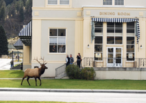 An elk walks on the grass outside a store